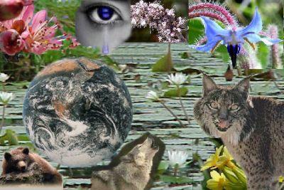 biodiversidad3au