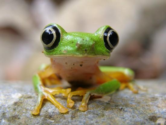 biodiversidad6