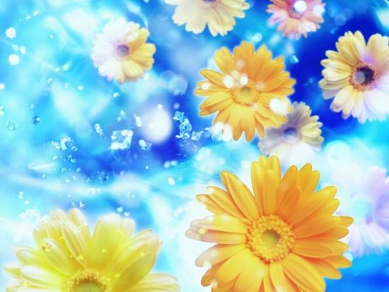 Flores Agua 1_800