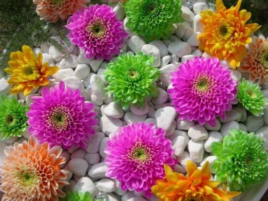 Flores Multicorlor_800