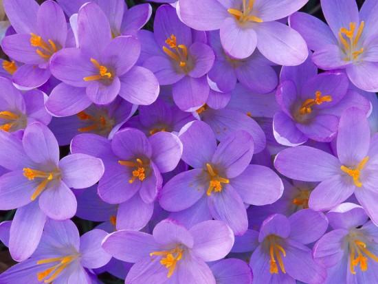 Floresondo-de-pantalla-Flores-17