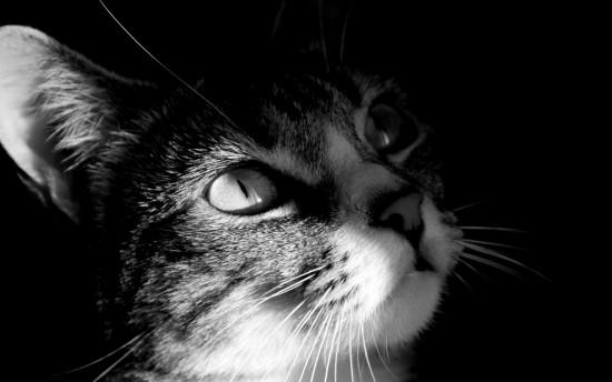 blanco y negro.jpg3
