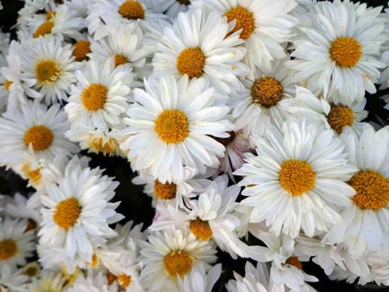 flores-fondo-1353593243_78