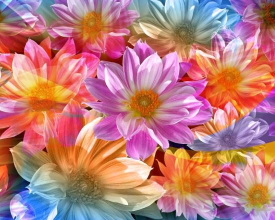 flores-fondos-de-pantalla-236429