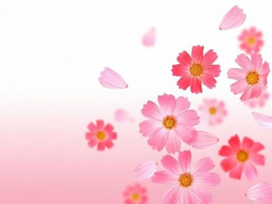 flores-y-rosas-6