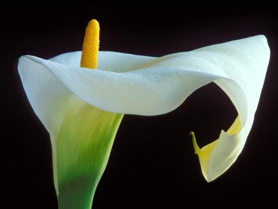 floresondos-flores-3