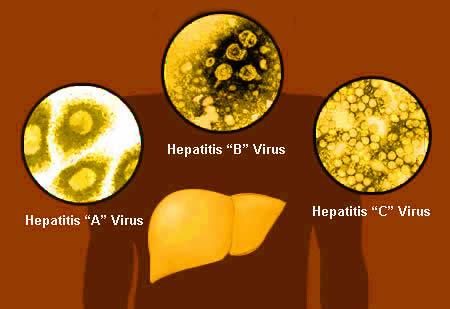 hepatitis_viruse-head