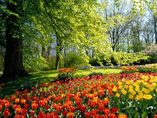 primaverapaisajes.jpg1