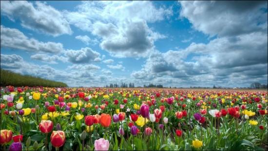 primaverapaisajes.jpg3