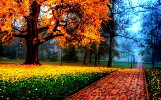 otoño.jpeg1