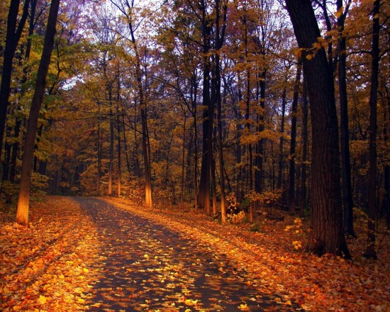otoño.jpeg2