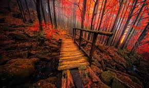 otoño.jpeg3