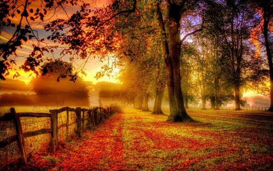otoño.jpeg4