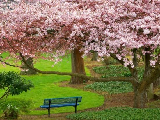 primaverapaisajes.jpg18