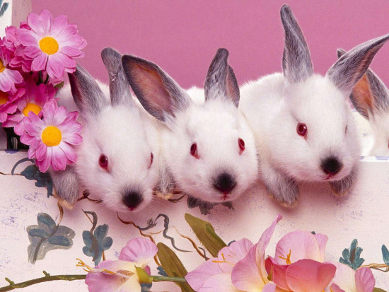 conejossss