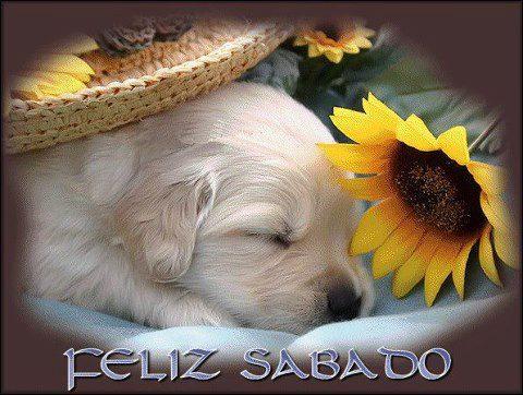Sabado_43