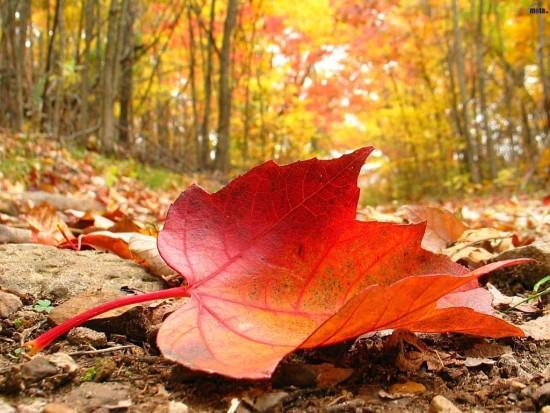 otoñofig-3-estampa-otonal
