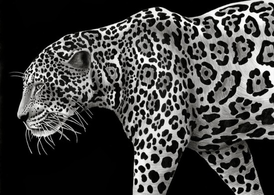 animal1f13-timjeffsdibujosenblancoynegro8