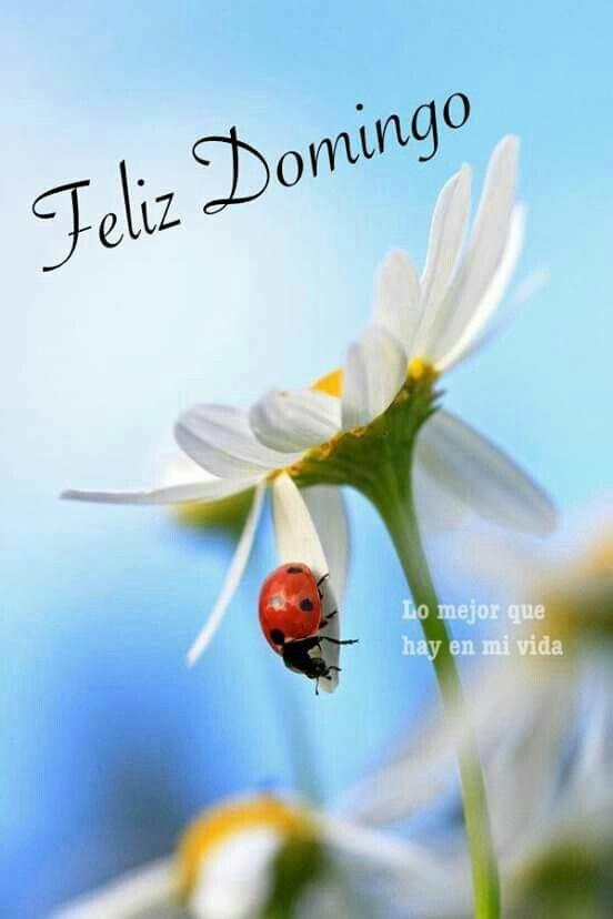 Imagenes Bonitas Con Frases De Feliz Domingo Para Descargar Gratis E