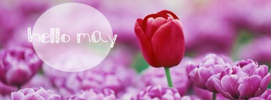 hello-may-cover-photo