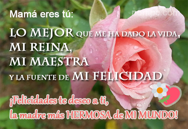 113 Tarjetas Con Flores Y Mensajes Para El Dia De Las Madres Y Feliz Dia A Mama Para Whatsapp