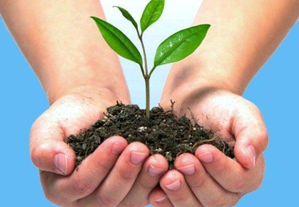dia-del-medio-ambiente-2014-cuidados-tierra