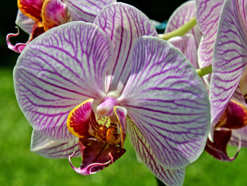 1-exotic-orchids-of-c-ribet-c-ribet