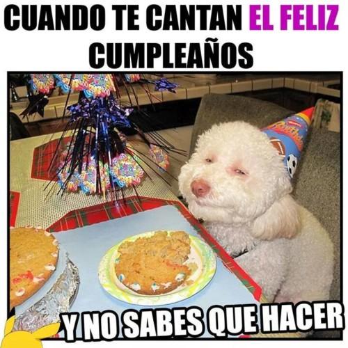 cuando-te-cantan-feliz-cumpleaños-perro
