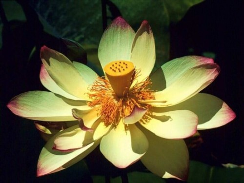 flor-exotica_2004_1024x768