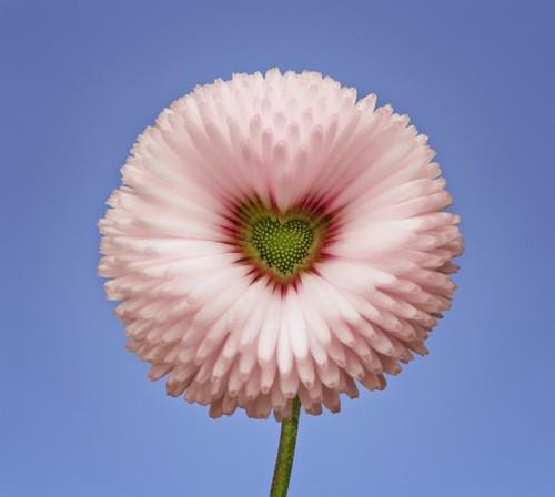 90 Imágenes Y Mensajes Con Flores Hermosas Exóticas Con Frases