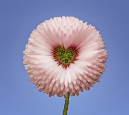flores-exoticas-2