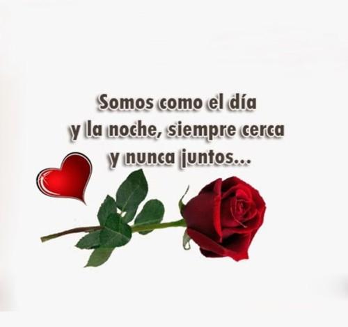 90 Imagenes Y Mensajes Con Flores Hermosas Exoticas Con Frases