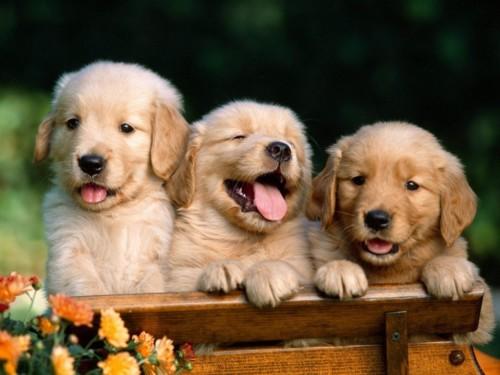 fotos-de-cachorros-11