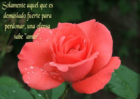 imagenes-de-amor-con-rosas-y-frases-para-facebook