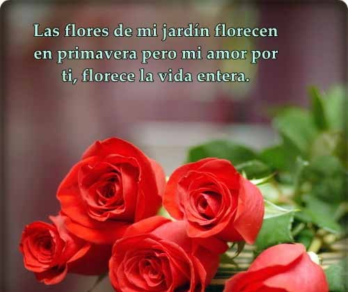 imagenes-de-rosas-hermosas-con-frases-de-amor-2