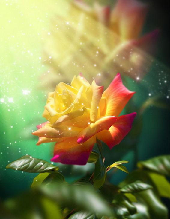 la-rosa-mas-hermosa-del-mundo-flores-exoticas-imágenes-bonitas-fotos-gratis-muy-lindas-para-compartir-en-facebook