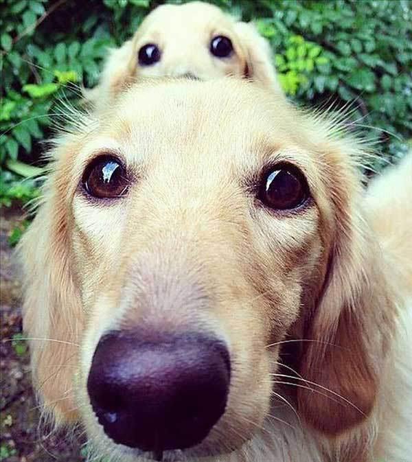 perros-cachorros-foto-9