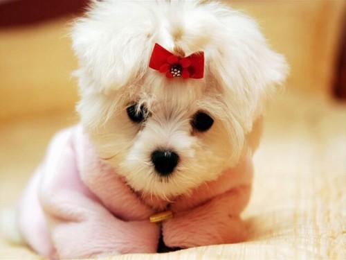 perros-lindos-los-perros-7g