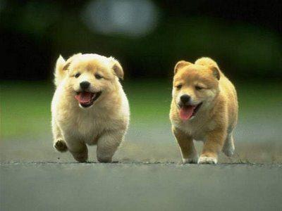 razas-de-perros-mas-bonitos-del-mundo-400x300