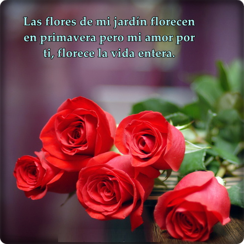 02-frases-de-amor-con-rosas-para-dedicar