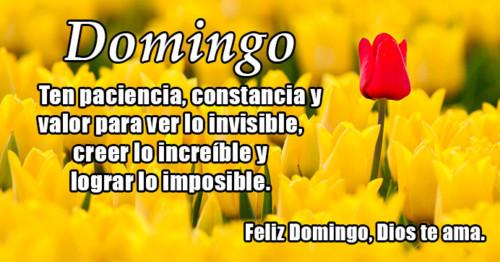 Imagen de flores amarillas con frase de domingo http://fechaespecial.com/