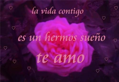 imagenes-de-rosas-con-frases-bonitas-de-amor-7