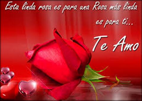 rosas-com-frases-de-amor