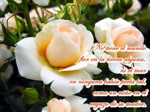 flores-blancas4