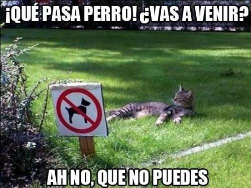 gato-en-el-pasto-que-pasa-perro-vas-a-venir-ah-no-que-no-puedes