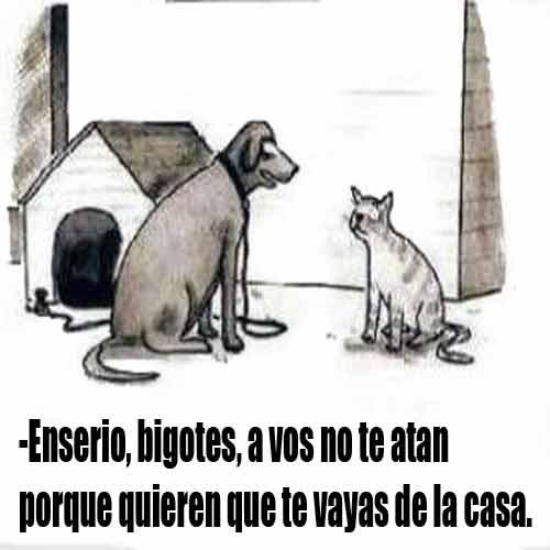 gato-perro-imagenes-chistosas