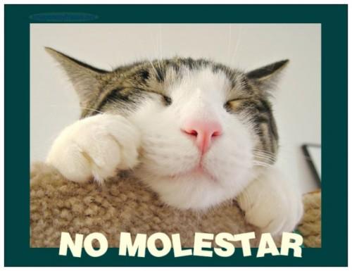 imagenes-chistosas-con-frases-gato-perezoso