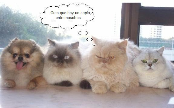 imagenes-con-frases-chistes-gatos