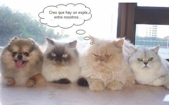 imagenes-con-frases-chistes-gatos