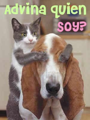 imagenes-de-perritos-con-frases-chistosas-y-gatos-301x400